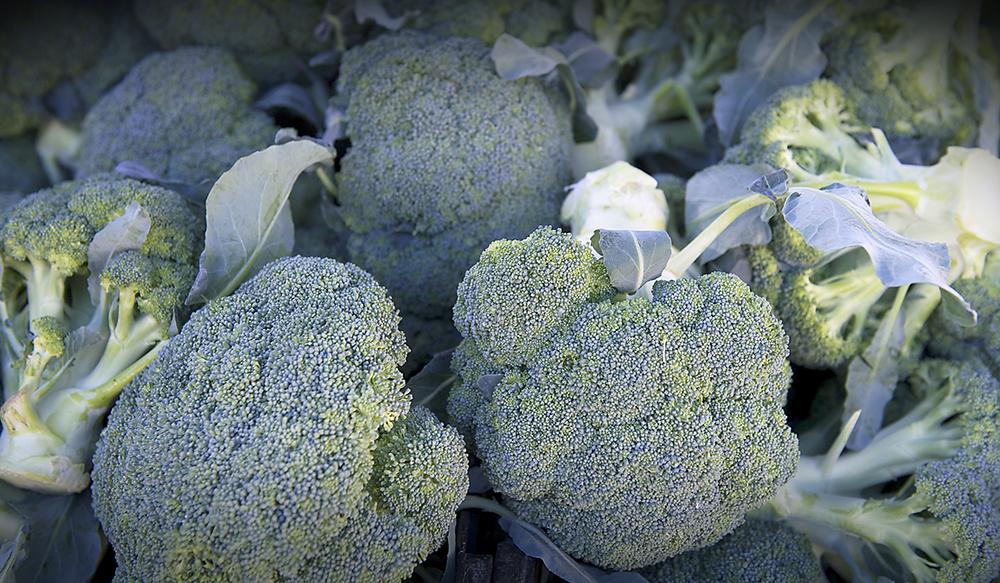 broccoliweb