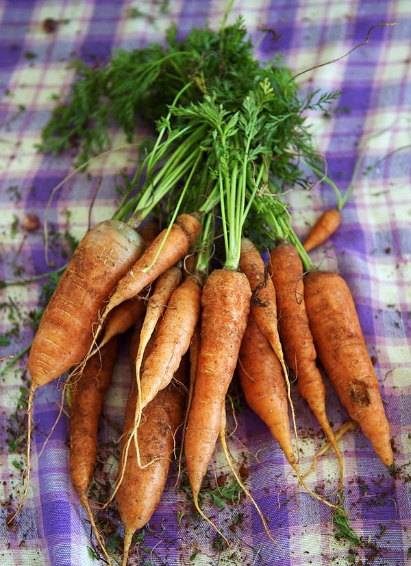 carrotstops1
