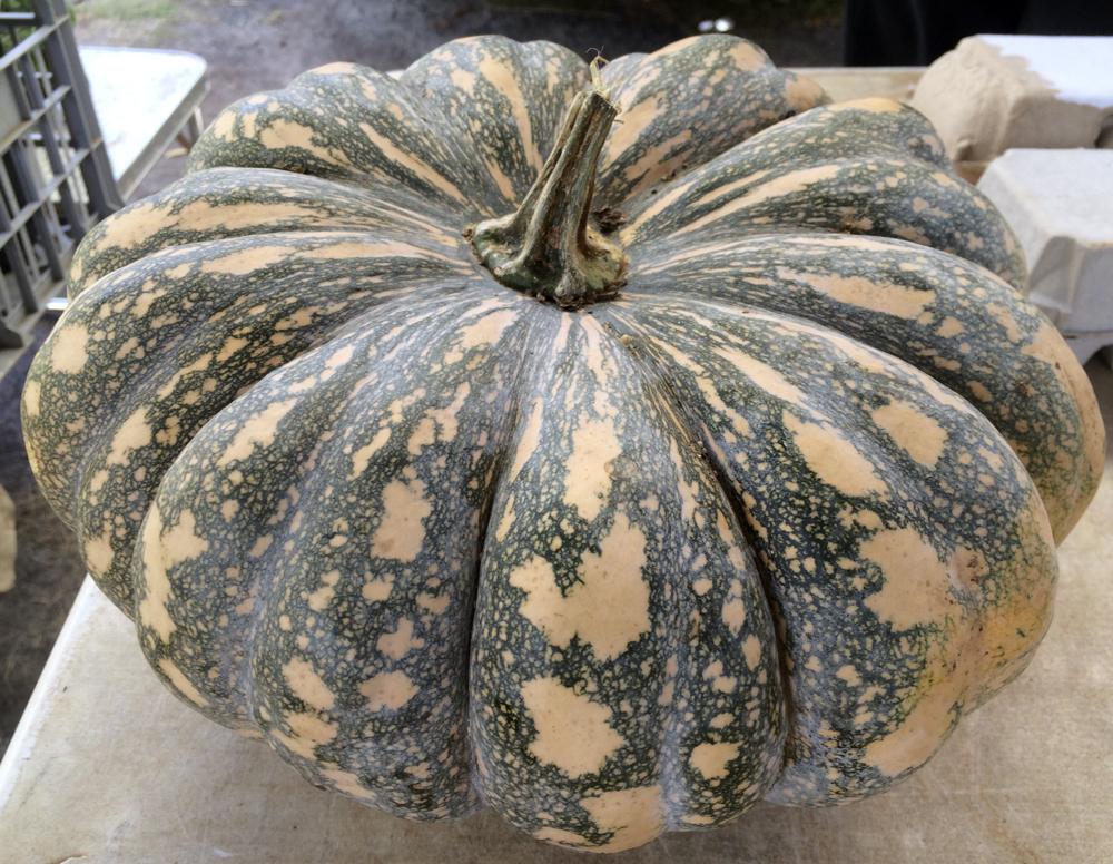 pumpkin72