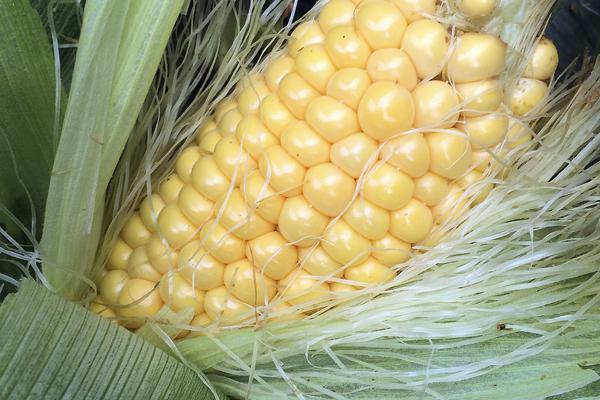 corncobw